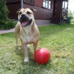 Ка де бо с мячом