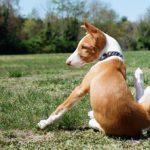 Поденко ибиценко щенок