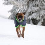 Немецкий боксёр в защите от холода