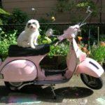 Мальтипу и мотоцикл